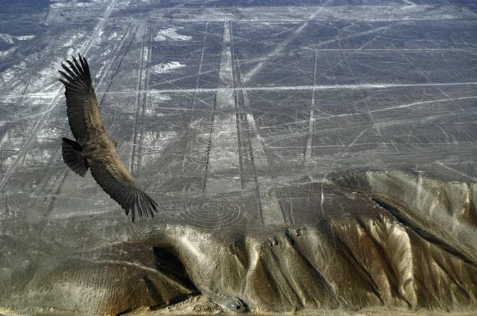 Condor a sobrevoar o planalto de Nazca