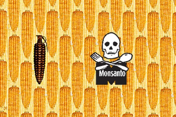 Sementes Terminator da Monsanto