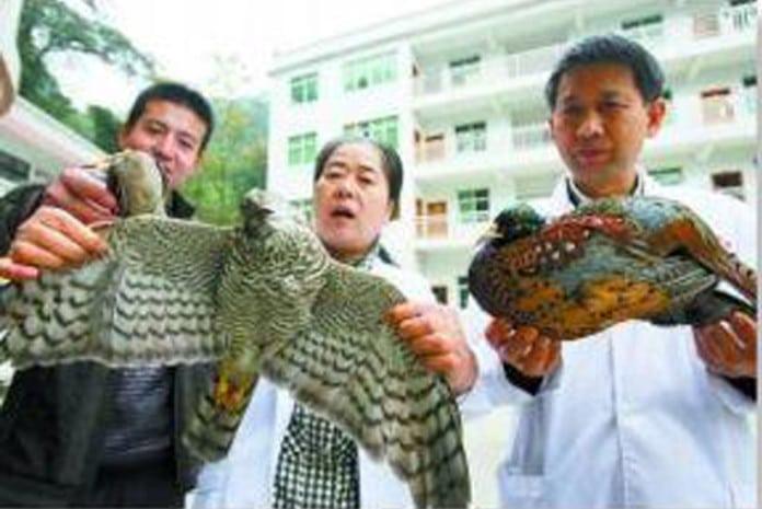 Fenómeno dos pássaros mortos na China