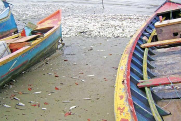 Peixes Mortos no Paraná