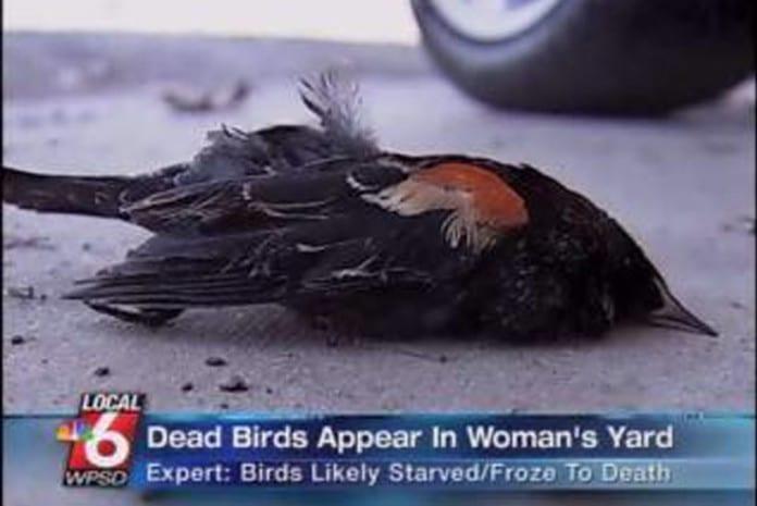 Relato de testemunha do fenómeno das aves mortas