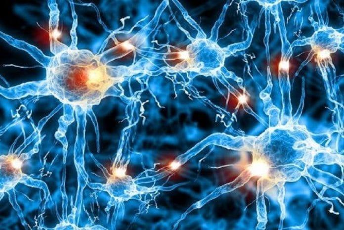 Conexões cerebrais benéficas