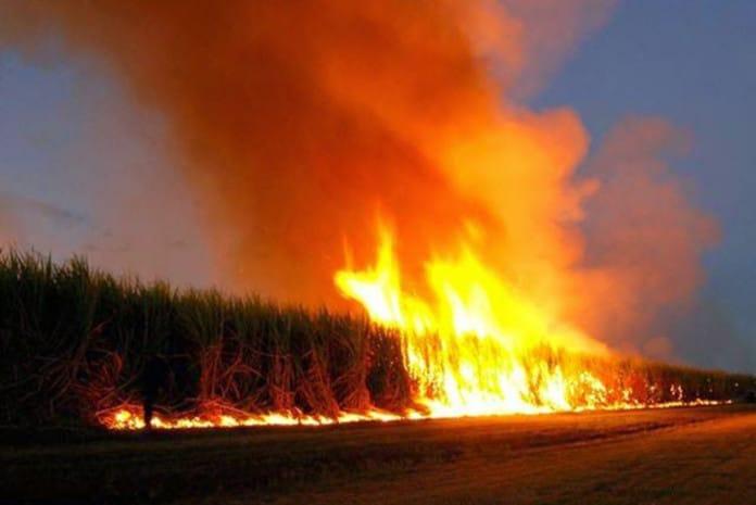 Hungria queima os campos que foram cultivados com sementes Monsanto