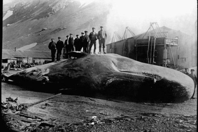 James Bartley Whale