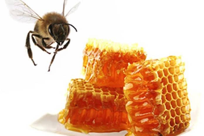 Tirania do Governo: Departamento de Agricultura de Illinois destrói secretamente apiculturas