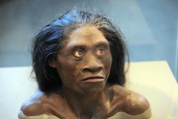 Busto do Homo floriensis