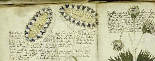 Algumas páginas do Manuscrito Voynich
