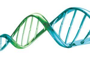 Criação de ADN