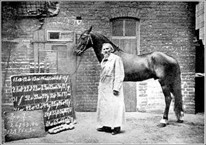 Hans, o cavalo dotado com faculdades matemáticas