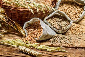 Lei das sementes