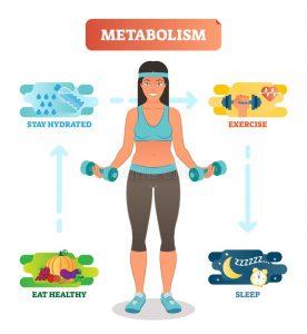 Metabolismo humano