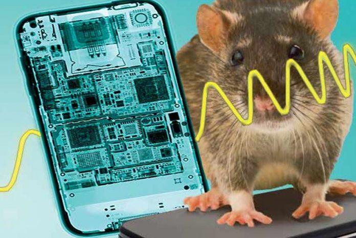 Ratos expostos a radiação 2G e 3G