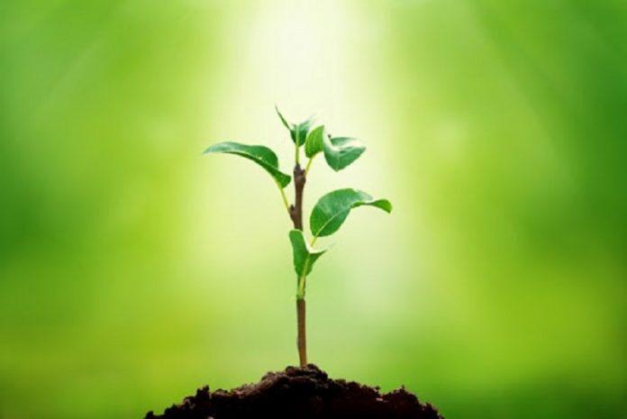 Plantas inteligentes